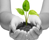 plant sprouting in hands representing future of website